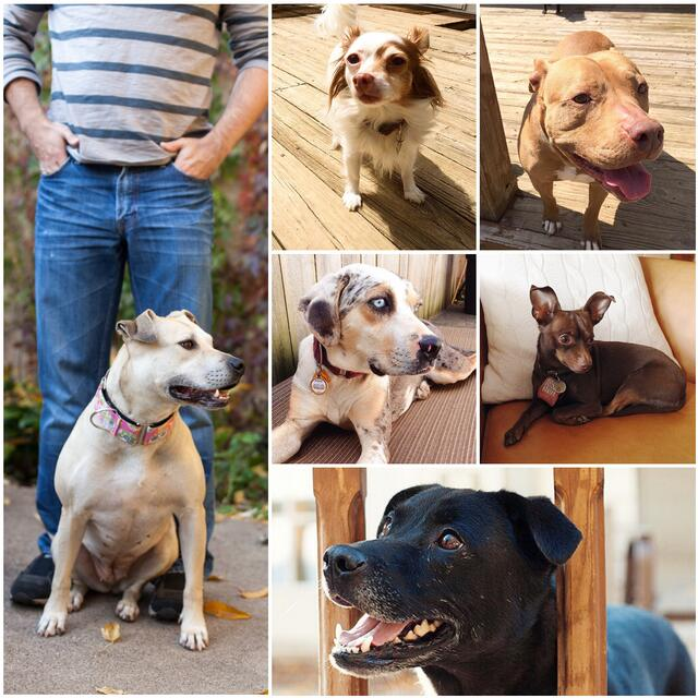 collage of all 6 of Jason's dogs